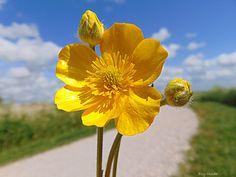 #fotografie #bloemen #flowers #lente #spring #geel #yellow