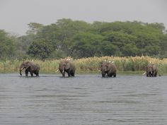 Liwonde National Park - Top 10 Unforgettable Malawi Experiences