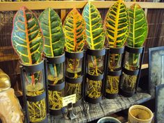 Liza's photos, cool vases at Hey Jhonny A place for plant and garden lovers to unite