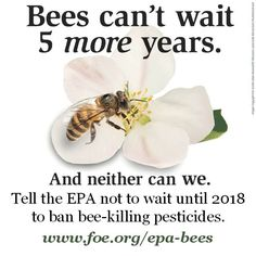 Europe recently put into effect a ban of bee-killing pesticides called neonicotinoids. Tell the EPA that it shouldn't delay action for five years, it must take immediate action and ban these pesticides today. www.foe.org/epa-bees