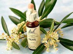 -BLEN Flores de Bach- Olive, Bach Flower Remedy