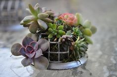 Doesn't have to be this odd contraption, but I like the mix of tiny succulents.
