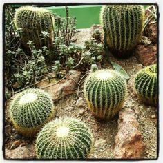 Wüstenhaus