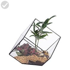 5.9inches Squares Inclined Open Cube Clear Glass Geometric Terrarium Box Tabletop Succulent Air Plant Fern Moss Display Flower Pot Indoor Window Planter - Lets plant (*Amazon Partner-Link)
