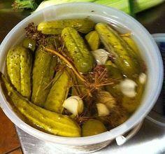 Resultado de imagen de imagenes de gusanos de maguey for Muebles de cocina modernos trackid sp 006