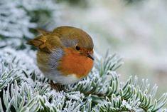 Tiny Robin!♡