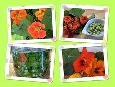 Lichořeřišnicové listy, květy a semena pokrájíme, dáme do zavařovací sklenice, zalijeme destilátem, aby byl obsah ponořen, zavíčkujeme a necháme… Destiel, Vegetables, Food, Home Decor, Decoration Home, Room Decor, Essen, Vegetable Recipes, Meals