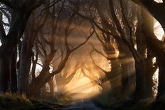 Real life forest scene from Ireland