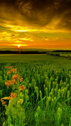 Breathtakingly beautiful green field and flowers in a golden sunset.