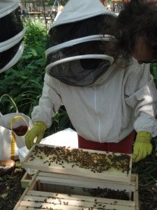This community hive pollinates the gardens and is part of the programming of an educational center dedicated to helping teach children about sustainability and gardening. Start A Non Profit, Types Of Bees, Honey Bee Hives, Children's Museum, Golden Honey, Programming For Kids, Giving Back, Ecology, Sustainability