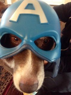 Sheba, the super hero