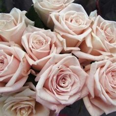 Sahara Roses...these have a gorgeous fragrance and more of a golden hue depending on season