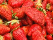 How to grow strawberries from a fresh strawberry.