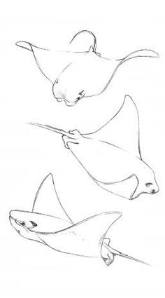 My future tattoo - my future tattoo - . - My future tattoo – My future tattoo – - Ocean Drawing, Shark Drawing, Painting & Drawing, Animal Sketches, Animal Drawings, Drawing Sketches, Fish Drawings, Pencil Drawings, Art Drawings