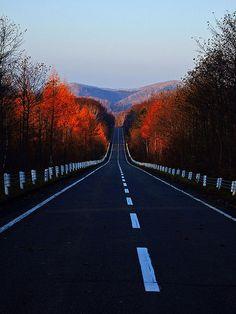 xx // Autumn Road, Japan photo via christine Japan Picture, Japan Photo, The Road, Beautiful Roads, Beautiful Places, Winding Road, Roadtrip, Photos, Pictures