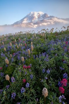 Mt. Rainier - breath taking view!!!!  I actually have distant relatives in Washington...I need to get to know them
