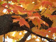 https://flic.kr/p/8JmtrN | Autumn Leaves