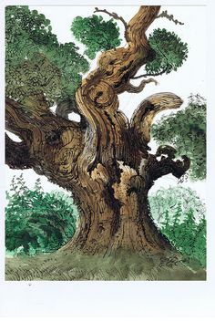 "oak tree (David Gentleman from ""In the Country"")"