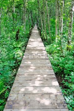 Stock Photo : Wooden path in a forest Wooden Path, Adventure Photos, Montenegro, Pop Up, Paths, Sidewalk, Stock Photos, Pictures, Image