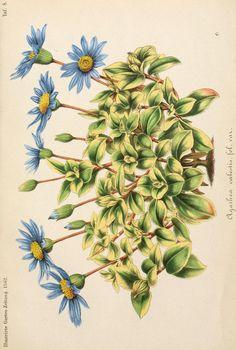 bd. 6, 1862 - Illustrierte Garten-Zeitung. - Biodiversity Heritage Library