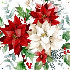 Christmas Poinsettia flowers with holly berries Christmas Poinsettia, Christmas Flowers, Christmas Makes, Christmas Art, Vintage Christmas, Christmas Holidays, Christmas Decorations, Christmas Ornaments, Christmas Paintings