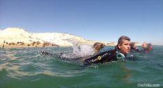 Buceo y Snorkeling con Lobos Marinos en Puerto Madryn | Fotos - Mapas - Consejos