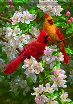 Cardinals by Beth Hoselton art Pretty Birds, Beautiful Birds, Animals Beautiful, Beautiful Wife, All Birds, Love Birds, Image Nature, Cardinal Birds, Bird Pictures