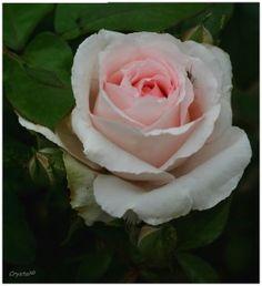 Joyeux Anniversaire Lulu, lettre d'une maman à sa fille - Quatre Saisons Au JardinQuatre Saisons Au Jardin