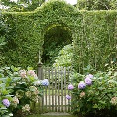 The Privet Hedge Trained over a metal arch, privet entices visitors to peek beyond the garden gate. Wooden Garden Gate, Garden Gates, Privet Hedge, Concrete Path, Living Fence, Metal Arch, English Country Gardens, Garden Cottage, Hedges