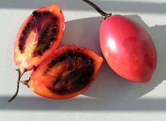 tomatearbol