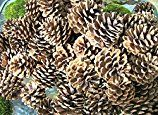 Did you know you can bake your pine cones to get the critters out? Let me show you how I prepare pine cones for my wreaths.