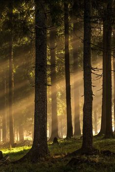 Light in the dark forest by Lazar Ovidiu (Rodna Mtns, Romania) Forest Light, Deep Forest, Pine Forest, Discover The Forest, Unicorn Land, Elf Ranger, Dark Paintings, Forest Wedding, Light And Shadow