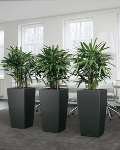 InTira Design: Using Indoor Plants Tastefully