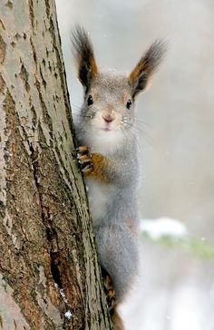 Hey, you got any nuts?