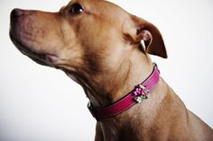Bee modeling one of our Birdie Collars in hot pink. Finest Italian leather. All hand crafted with special details. Collars are all finished with hand painted edges, plated buckle, some with logo D-ring plus an enamel BOWHAUSNYC dog bone charm. Available in Chartreuse and Hot Pink. Yellow enamel birdie with multi color floral with a sparkling Austrian crystal rhinestone. http://bowhausnyc.com/birdie-collar/