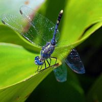 Brilliant. obsessed with dragonflies. #bugs #nature #photography