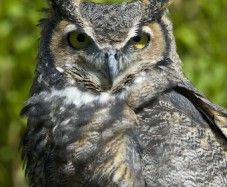 Owls are not seen often, but attend our annual Owl Prowl Weekend in March and learn more about these amazing creatures of the night!