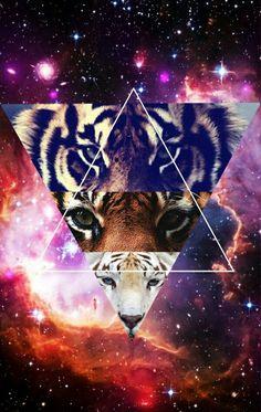 Drei Tiger sieht richtig geil aus in dem Dreieck. Super geil