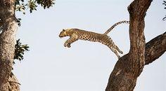 A new bespoke service from British Airways Holidays makes creating multi-destination trips so easy British Airways, South Africa, Giraffe, Club, Animals, Felt Giraffe, Animales, Animaux, Giraffes