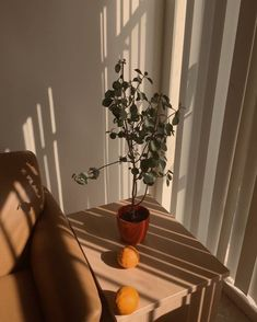 aesthetic brown beige indie francisco rooms san wallpapers novembre plants bakwaas vivre movie grass shadow chuu theme mood funny reblog