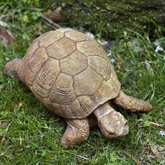 Give your garden a natural look with the Campania International Turtle Cast Stone Garden Statue . This realistic cast stone turtle statue makes the perfect. Stone Garden Statues, Frog Statues, Garden Stones, Outdoor Statues, Outdoor Sculpture, Rabbit Garden, Theme Color, Cast Stone, Tortoises