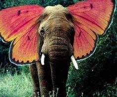 <3 yay elephants