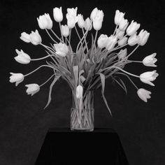 By Robert Mapplethorpe. Flowers