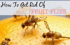 Tired of fruit flies taking over your home? Try these easy tips to get rid of them now.