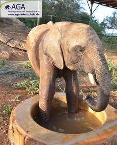 Die Tränke wird nicht nur zum Trinken genutzt, sondern bietet auch eine willkommene Abkühlung. Nairobi, Elephant, Animals, 3 Year Olds, Elephants, National Forest, Animales, Animaux, Animal