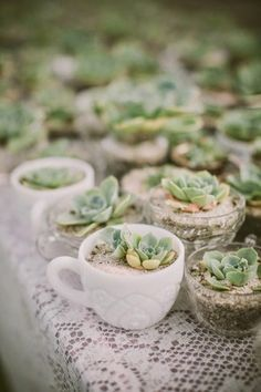 Scour your closets and cabinets for little vintage vessels that could make unique containers for your succulents.