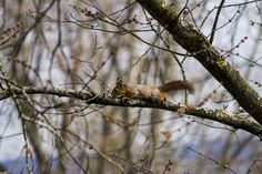 https://flic.kr/p/TMq8k6 | Quand le soleil se montre, les écureuils gambadent | Écureuils osloïtes. By Melti.