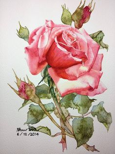 Ti Watercolour