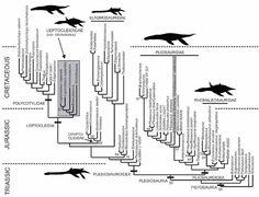 plesiosaur-phylogeny-Benson-et-al-2012-600-px-tiny-Jan-2013-Darren-Naish-Tetrapod-Zoology.jpg (600×460)  // The favoured plesiosaur phylogeny from Benson et al. (2012a). Note that leptocleidians are within Cryptoclidia, within Plesiosauroidea.