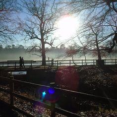 Misty Walk Black Park